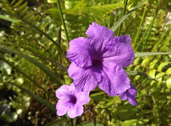 htcone flower