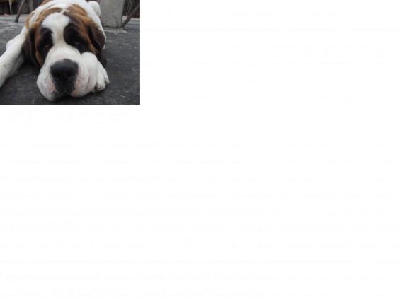 dog one1