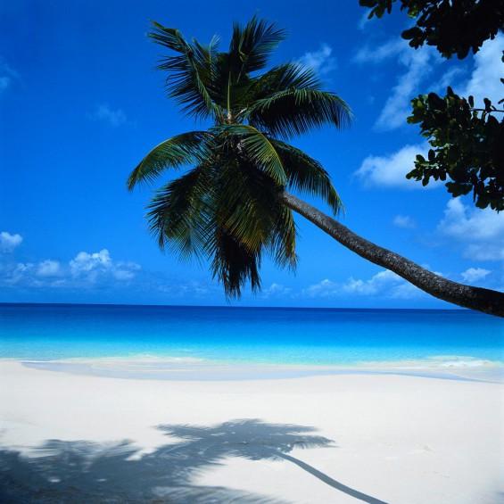 A gorgeous beach in Cancun