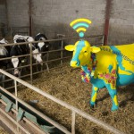 Connect to EE 4G Moo-Fi at Glastonbury