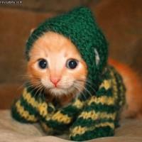 Tiny_Kitten_Scarf