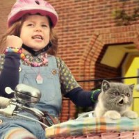 three-kitty1