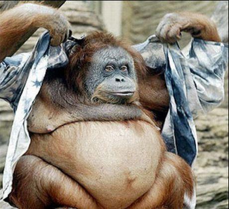 fat animal