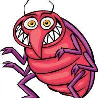 wpid-bedbug.jpg