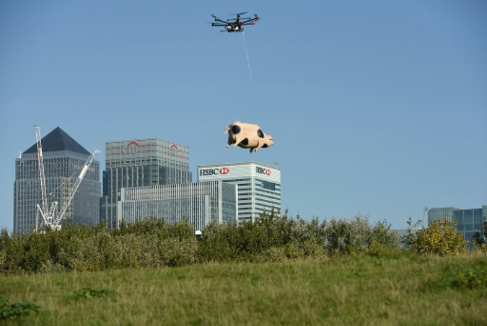 Pigs can fly   and theyre alcoholic!