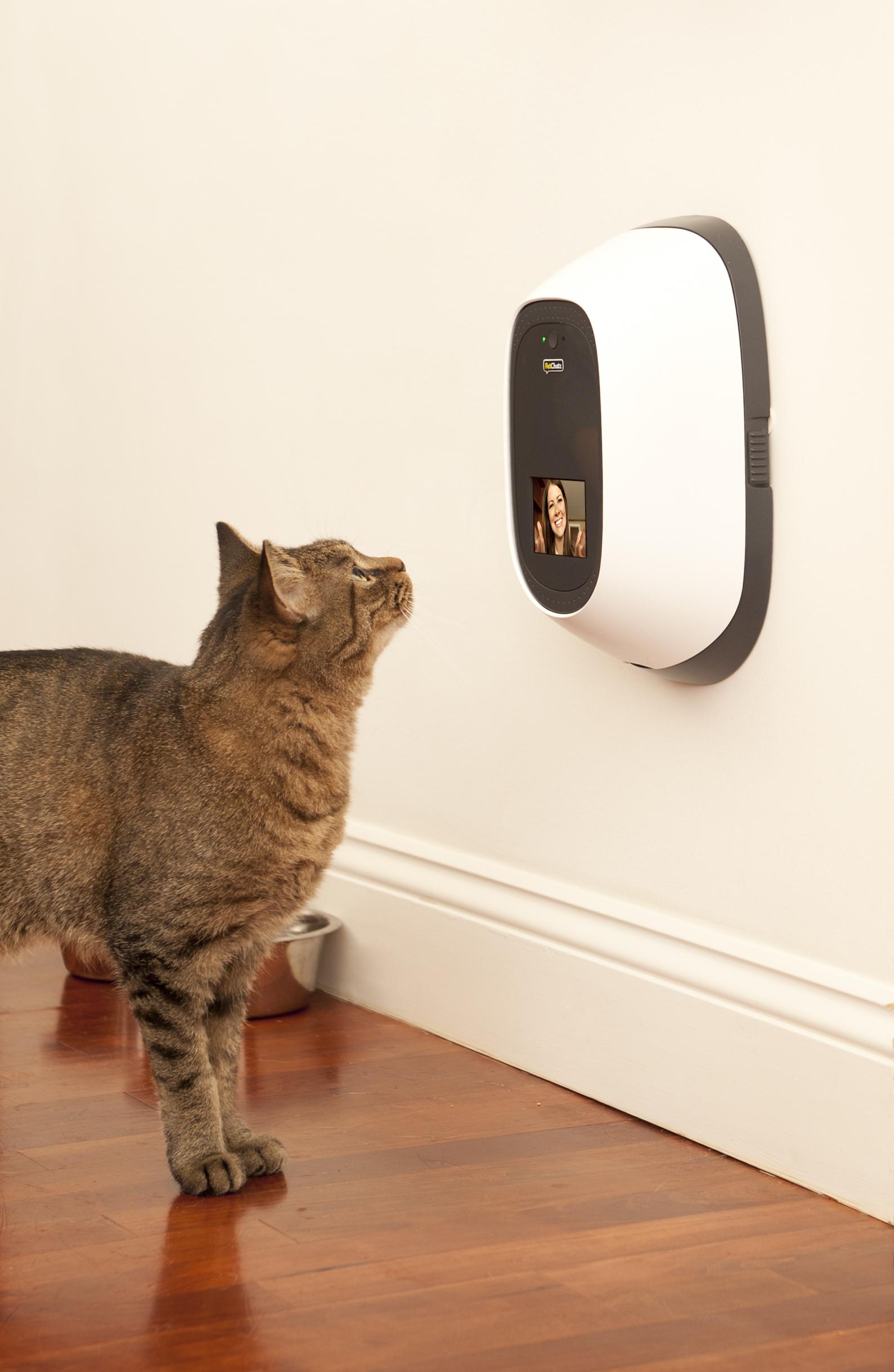 advantage ii for kittens