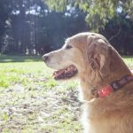 Keep an eye on your pet. Paby, the location and activity tracker.