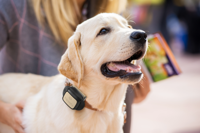 Vodafone will now help you track your pet too.