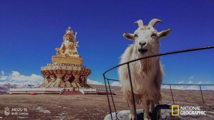 Meizu 15 camera snaps on show